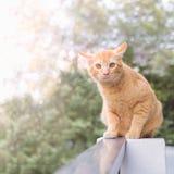 Chat orange Photographie stock libre de droits
