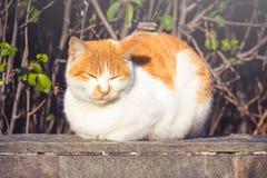 Chat orange mignon se reposant et détendant dehors images stock