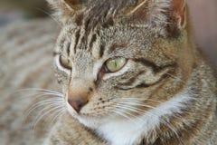 Chat parasite Photo libre de droits