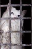 Chat parasite dans les cages. images libres de droits