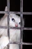 Chat parasite dans les cages. photo stock