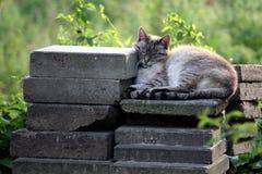 Chat paresseux Photographie stock libre de droits