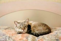 Chat paresseux dans la chambre à coucher photographie stock libre de droits