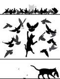 Chat parmi des pigeons Image libre de droits