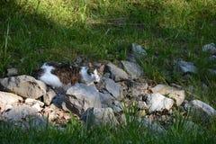 Chat parmi des roches Image libre de droits