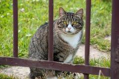 Chat pelucheux adulte se reposant derrière des tiges de barrière Photo stock