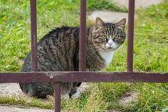 Chat pelucheux adulte se reposant sur l'herbe verte Photos stock