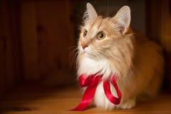 Chat pelucheux de gingembre avec un ruban rouge Image stock