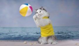 Chat pelucheux jouant sur la plage un jour ensoleillé Photos libres de droits