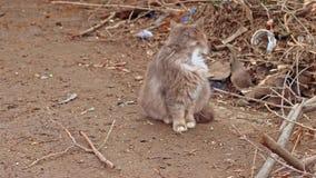 Chat pelucheux mignon dans la rue banque de vidéos