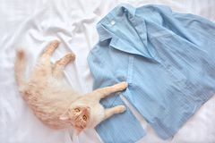 Chat pelucheux rouge se trouvant sur le lit avec des pyjamas La configuration plate avec la femme vêtx, l'espace de copie Photographie stock