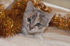 Chat pendant la nouvelle année Photographie stock