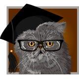 Chat persan avec les verres et le diplômé de chapeau Photo stock