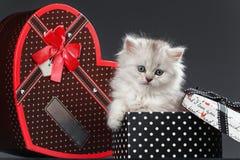 Chat persan de chat Image libre de droits
