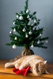 Chat persan jouant sous l'arbre de Noël photo libre de droits