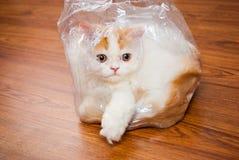 Chat persan mignon dans l'enveloppe en plastique sur le plancher en bois Image libre de droits