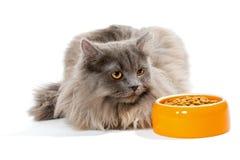 Chat persan se reposant près du bol de nourriture sèche Image stock