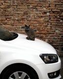 Chat posé sur un véhicule Photo stock