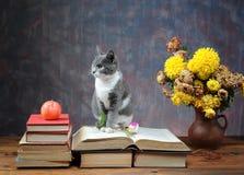 Chat posant pour sur des livres et des fleurs Photographie stock libre de droits