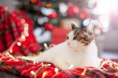 Chat près d'arbre de Noël images libres de droits