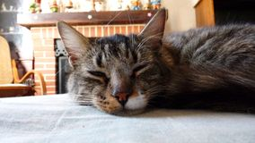 Chat près de la cheminée Image libre de droits