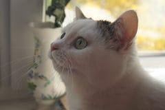 Chat près de la fenêtre images stock