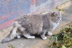 Chat près de la vieille maison Photo stock