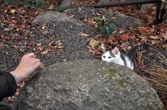 Chat prêt à sauter Photographie stock libre de droits