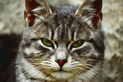 Chat prêt pour la chasse Photo stock