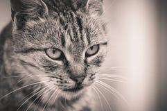 Chat prêt pour la chasse Photographie stock