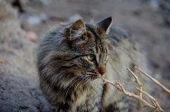 Chat qui vit ? la ferme image stock