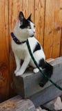 Chat rêveur posant dehors comme une diva Photo libre de droits
