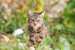 Chat rayé se reposant dans l'herbe dans les plumes mangées par des oiseaux Photographie stock