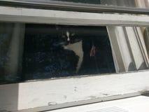 Chat regardant à l'extérieur l'hublot Photos stock