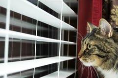 Chat regardant à l'extérieur l'hublot Image libre de droits