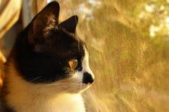 Chat regardant au côté Plan rapproché de chat Photographie stock