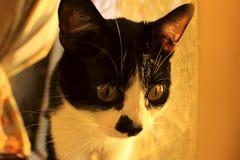 Chat regardant au côté Plan rapproché de chat Image libre de droits