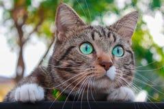 Chat regardant autour du parc Photo stock