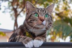 Chat regardant autour du parc Photographie stock