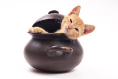 Chat regardant d'une casserole d'argile Image stock