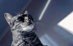 Chat regardant des ombres photos libres de droits