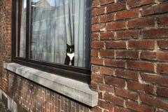 Chat regardant hors de l'hublot Photo libre de droits