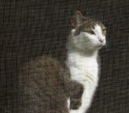 Chat regardant hors de l'hublot examiné Photographie stock libre de droits