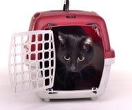 Chat regardant hors de sa cage de déplacement Photo stock
