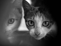 Chat regardant l'appareil-photo Photo stock