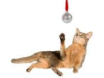 Chat regardant la bille de Noël Image libre de droits