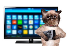 Chat regardant la TV Photographie stock libre de droits