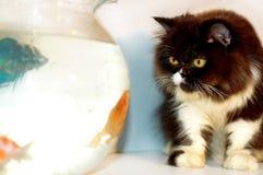 Chat regardant les poissons 3 d'or Photographie stock libre de droits