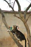 Chat regardant un oiseau images libres de droits