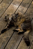 Chat Relaxed Images libres de droits